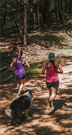 Two runners and a dog follow a sun-dappled trail through trees.
