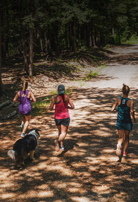 Three runners and a dog follow a sun-dappled trail through trees.