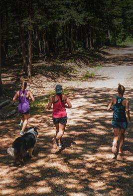 Three runners and a dog follow a sun-dappled trail through trees.