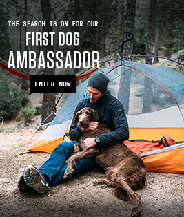 The search is on for our first dog ambassador | Enter Now